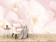 Фотообои Орхидеи распустились - 4