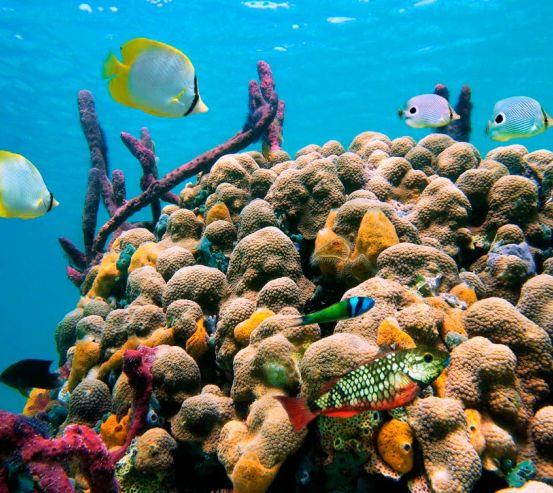 Фотообои Коралловый риф 6971