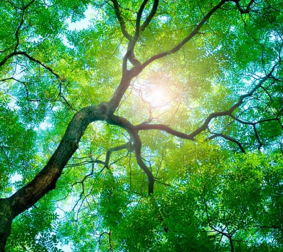 Фотообои Дерево, солнце 4721