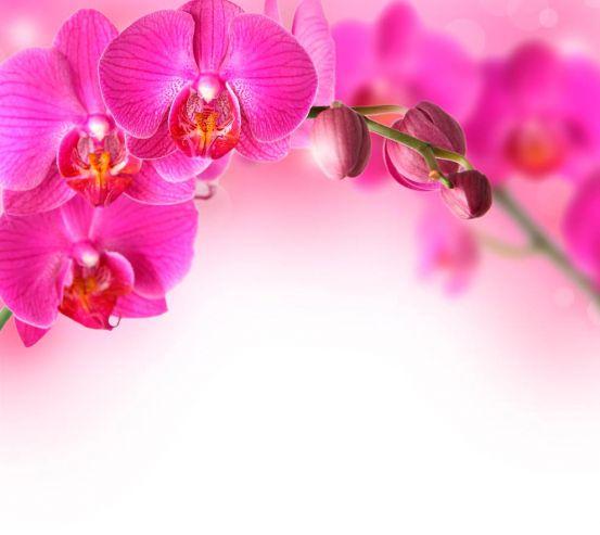 Фотообои Веточка орхидей розовых 11988