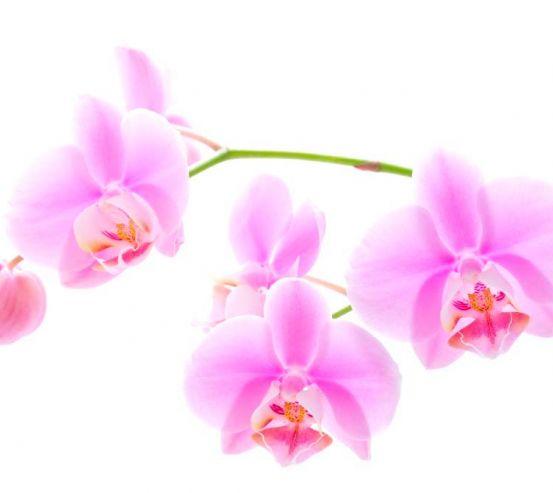 Фотообои Орхидеи распустились 1774