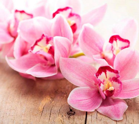 Фотообои Орхидея 16832