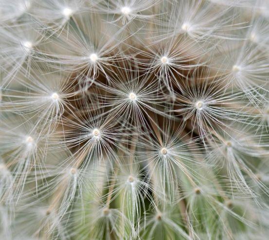 Фотообои семена на одуванчике 20624
