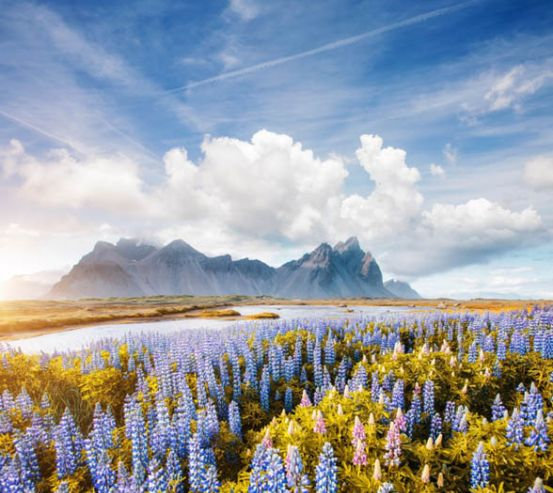 Фотообои Цветочная поляна в горах 25572