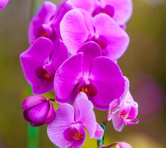 Фотообои ветка орхидеи 21383