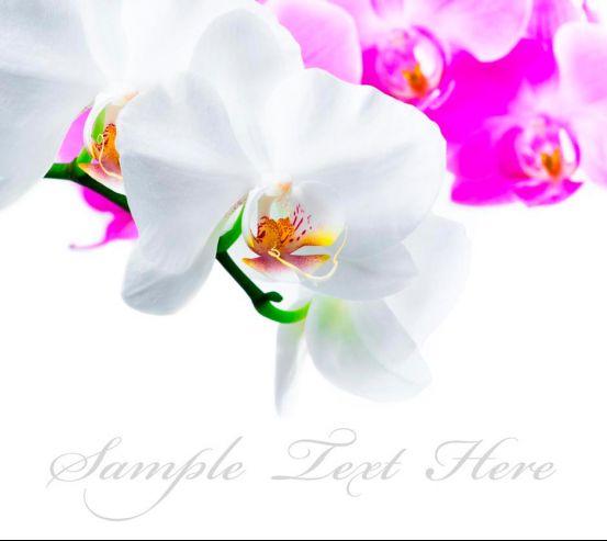 Фотообои Бело-розовые орхидеи 7308