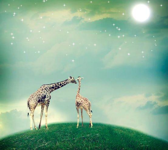 Фотообои 2 влюбленных жирафа 18821