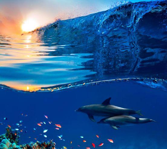 Фотообои Дельфины и море 11491