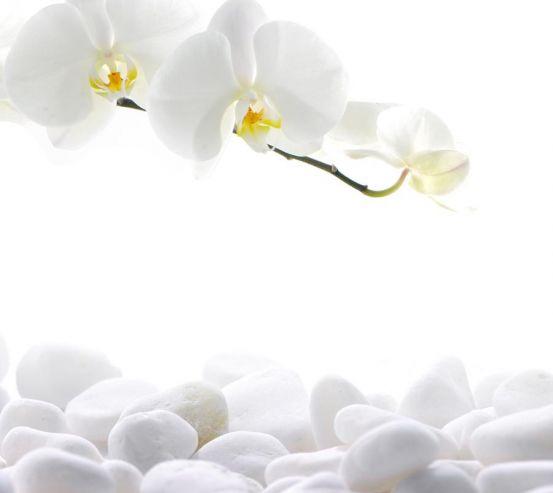Фотообои Орхидеи белые 8318