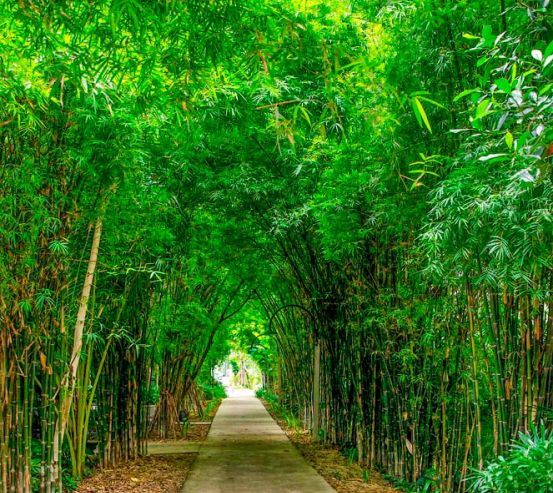 Фотообои Бамбук, дорга, плита 13357