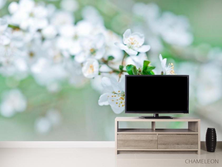Фотообои Весной цветущий абрикос - 2