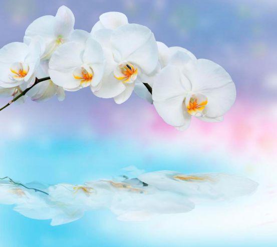 Фотообои Орхидея 19384
