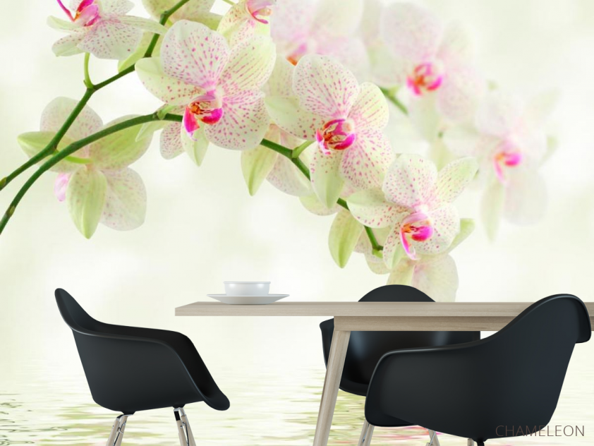 Фотообои Орхидеи над водой - 1
