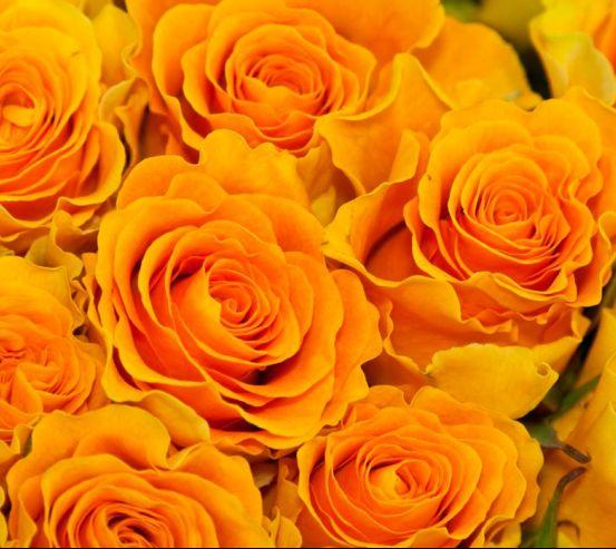 Фотообои Розы желтого оттенка 6921