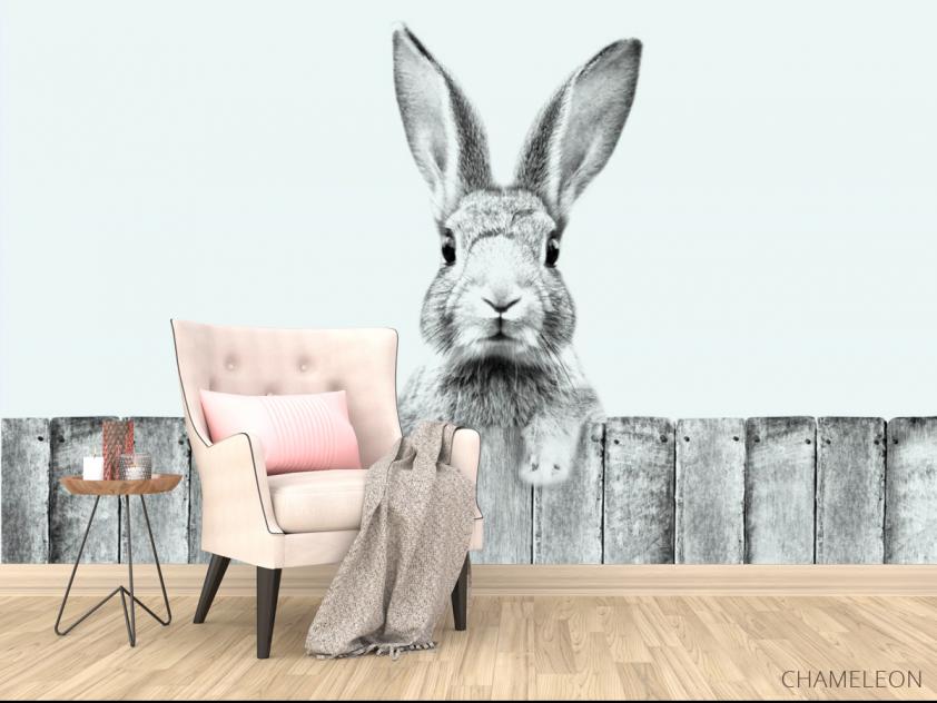 Фотообои Милый кролик - 4