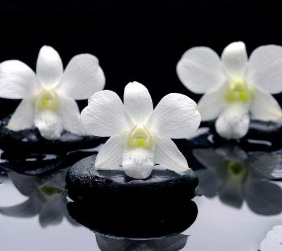 Фотообои Белые орхидеи на камнях 8847