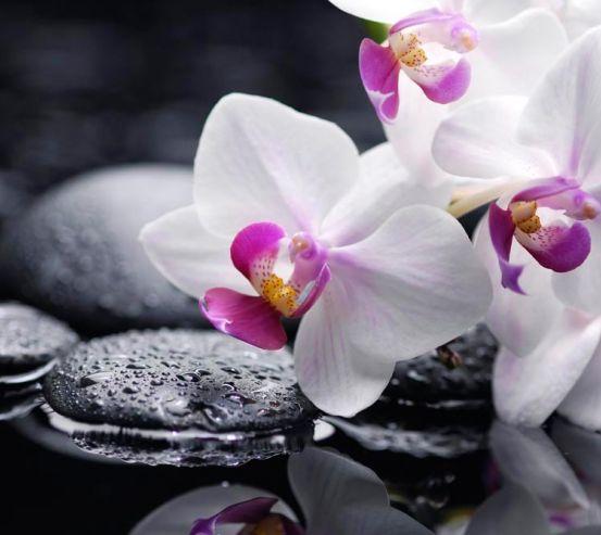 Фотообои Белые с малиновым орхидеи 9539