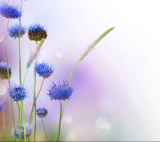 Фотообои Степные голубые цветы 7623