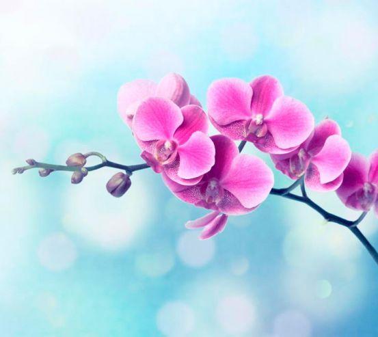 Фотообои Малиновое цветущее дерево 1373