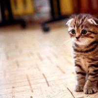 Фотообои Коты