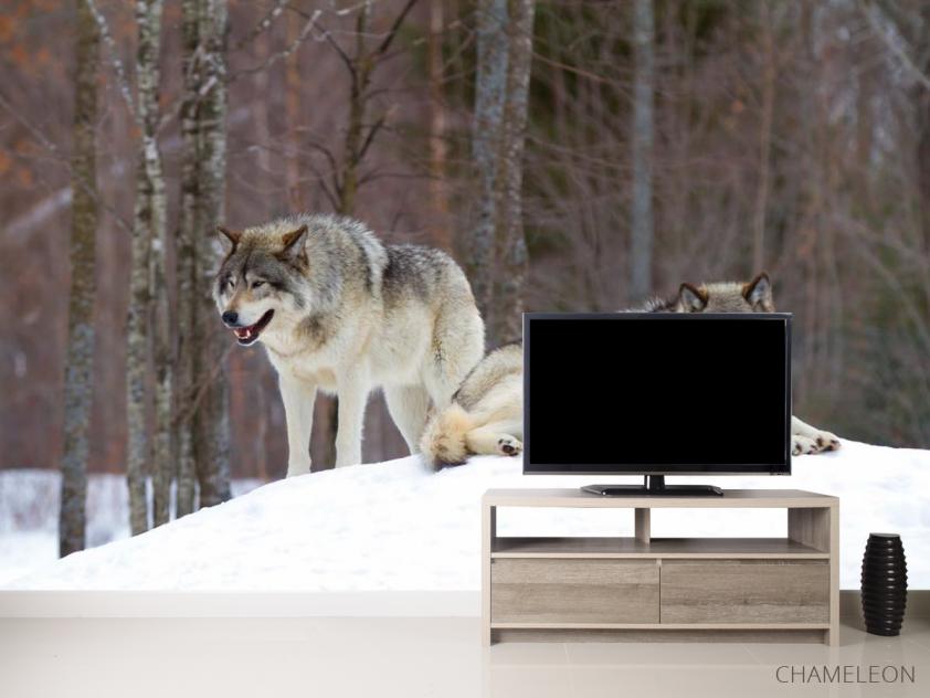 Фотообои два волка на снегу - 2