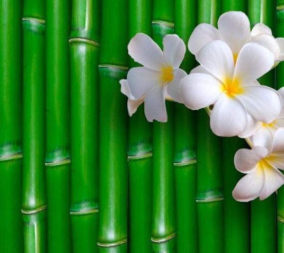 Фотообои Бамбук и цветы 9311