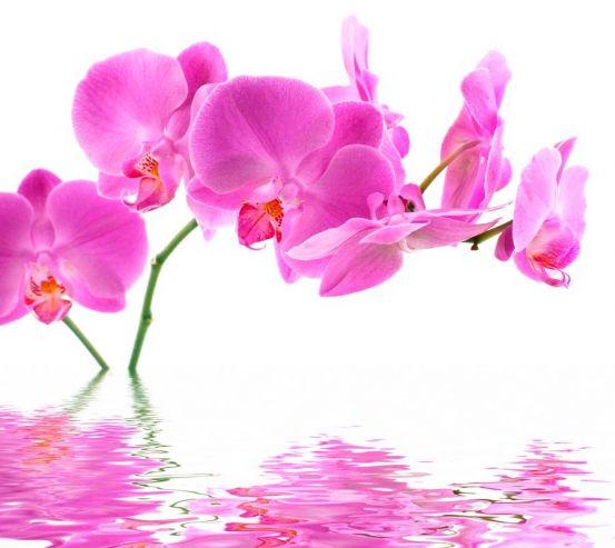 Фотообои В воде орхидеи 6618