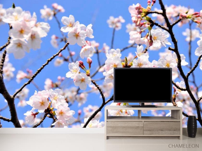 Фотообои Расцвели абрикосы весной - 2