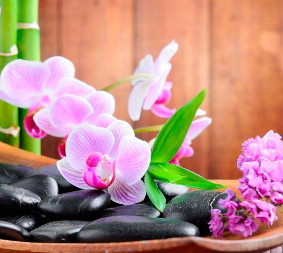 Фотообои Бледно-розовые орхидеи 4582
