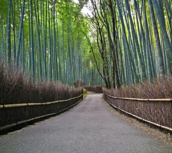 Фотообои В бамбуковую сказку 11933