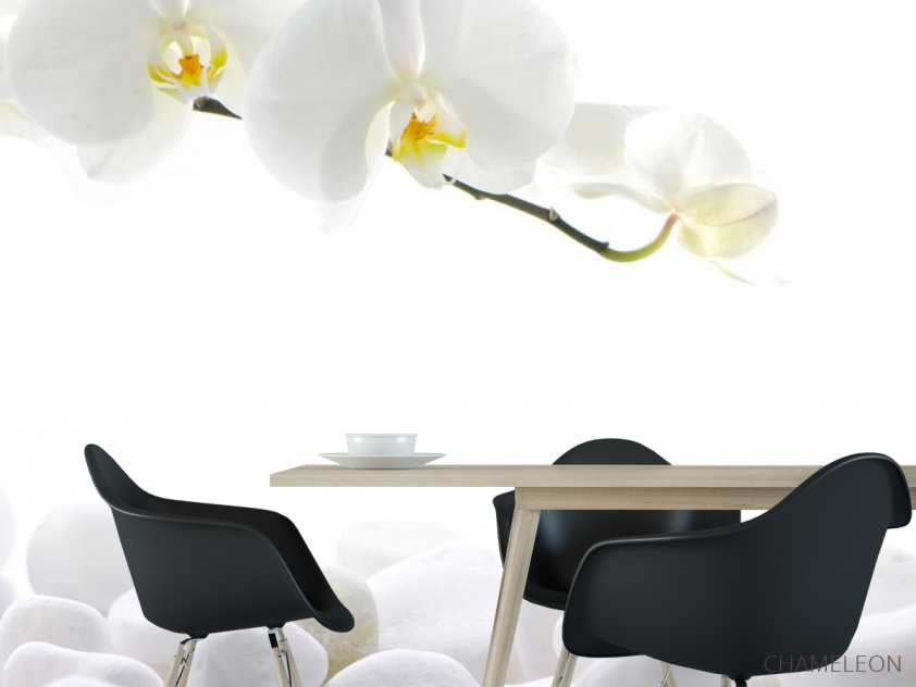 Фотообои Орхидеи белые - 1