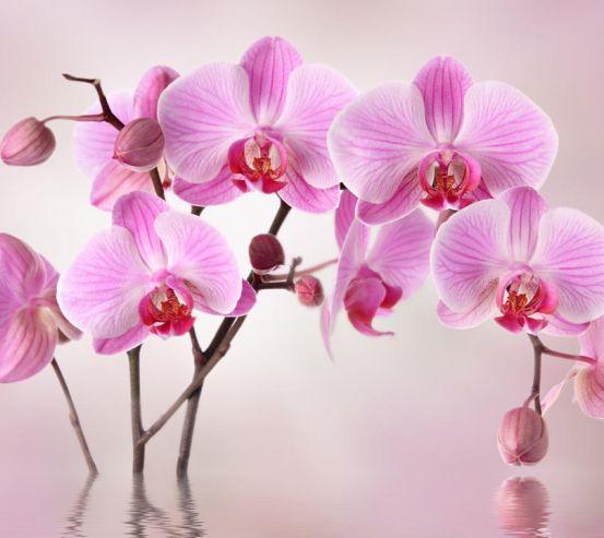 Фотообои сиреневые орхидеи из воды 20910