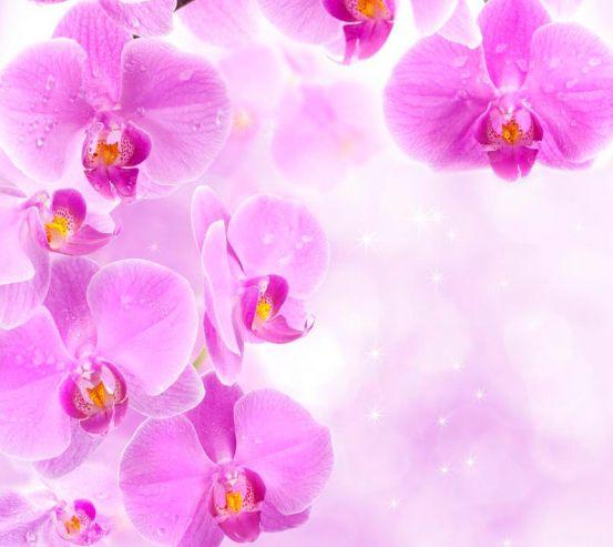 Фотообои Лиловая орхидея 4779