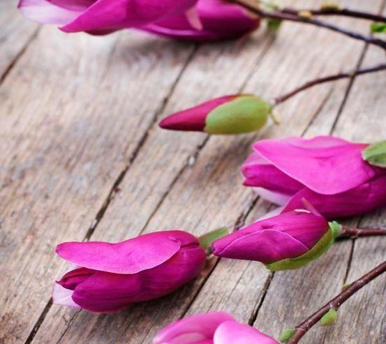 Фотообои Цветок семейства бобовых 5735