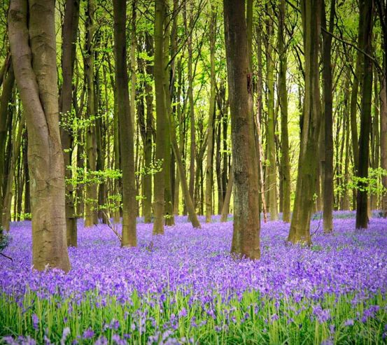 Фотообои Ковер с цветов 10300
