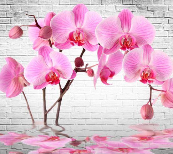 Фотообои в кухню Орхидеи 19551