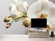 Фотообои Орхидея белоснежная - 2