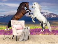 Фотообои белая и черная лошадь - 4
