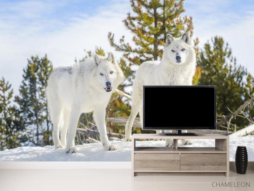 Фотообои два белых волка на снегу - 2