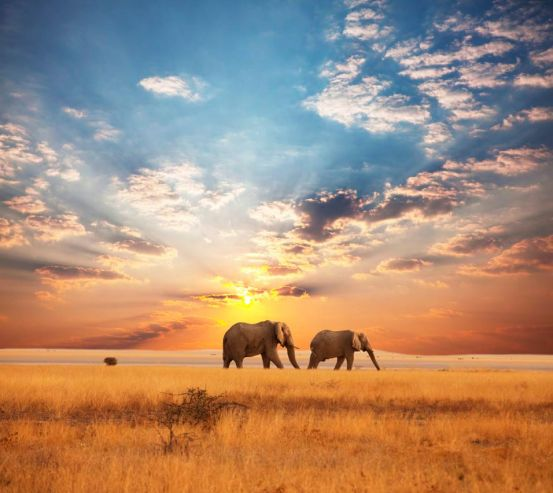 Фотообои Слоны на закате 3055