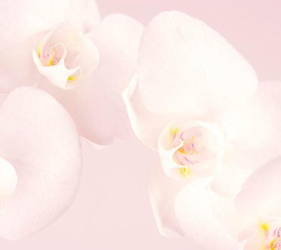 Фотообои Орхидеи распустились 8106