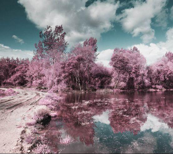 Фотообои Деревья с отражением 17751