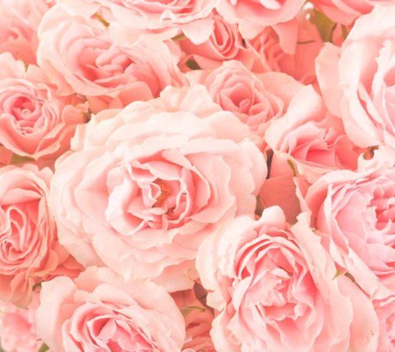 Фотообои Розы нежно-розовые 7466