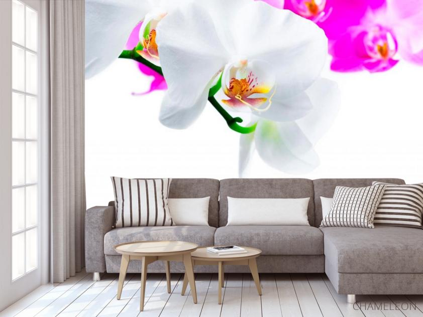 Фотообои Бело-розовые орхидеи - 3