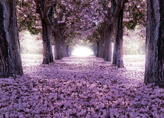 Фотообои Цветущие деревья