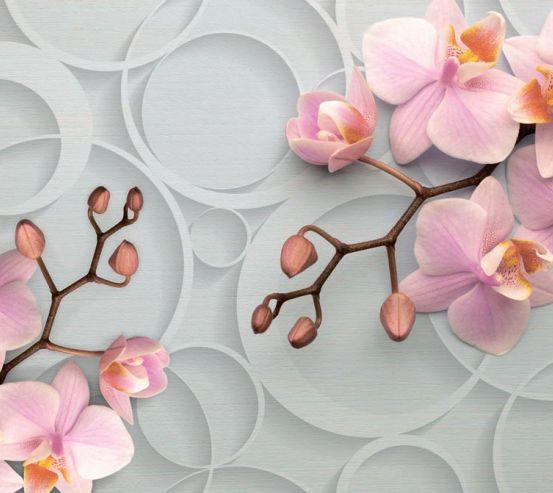 Фотообои Орхидея в кругах 19761