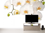 Фотообои Орхидеи белые и бутоны - 2