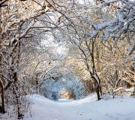 Фотообои Пришла зима 1279
