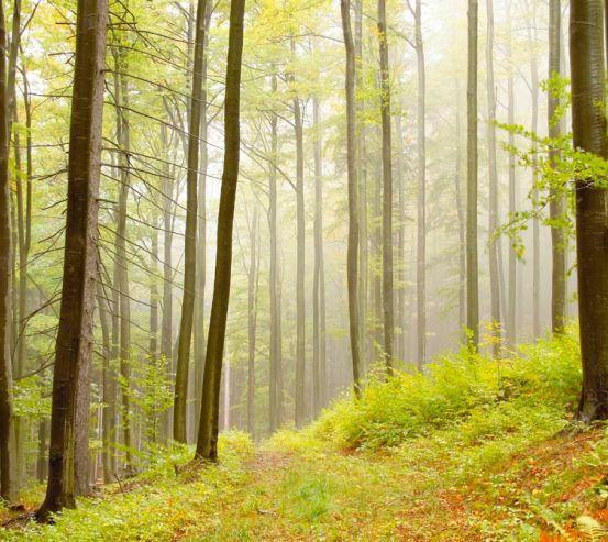 Фотообои Кусочек леса 0814
