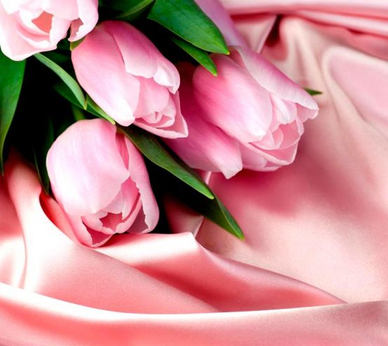 Фотообои Розовые тюльпаны 1124